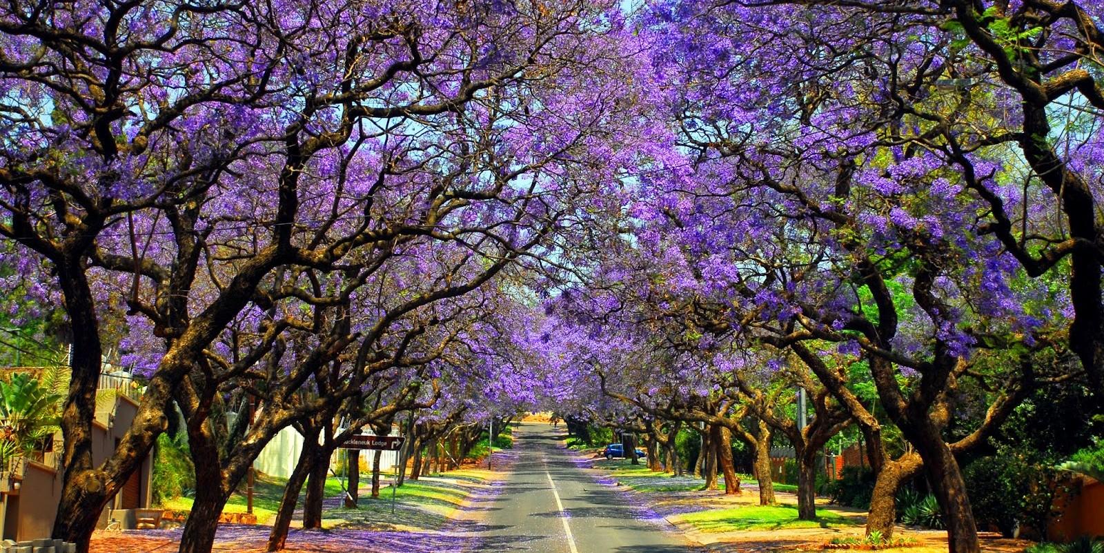 Du lịch Nam Phi: Johannesburg – Pretoria – Sun City – Cape Town 8 ngày