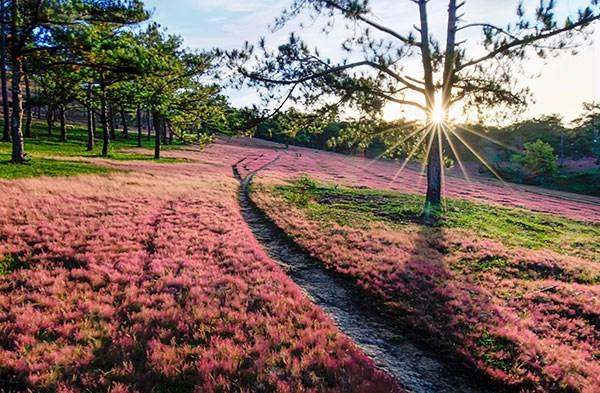Đà Lạt - vùng đất thơ mộng và yên bình!