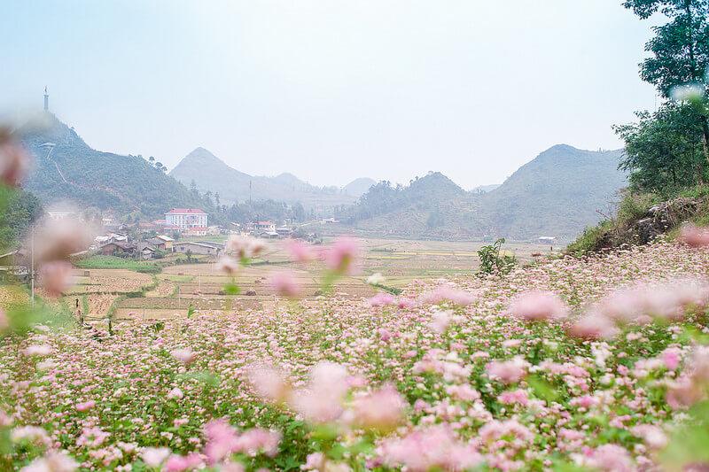 Du lịch Hà Giang ngắm tam giác mạch