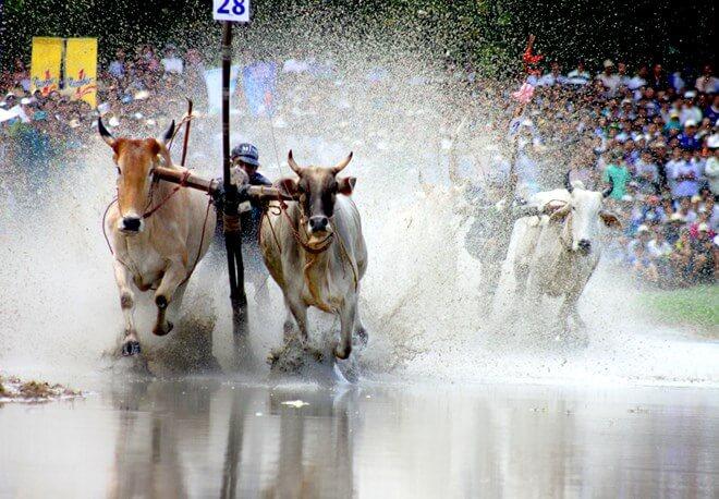 5 Lễ hội độc đáo ở miền Tây nhất định không thể bỏ lỡ