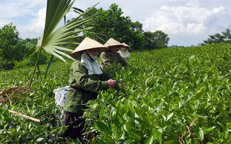 6 làng nghề truyền thống tiêu biểu của Phú Thọ